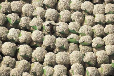 Cotton bales, Ivory Coast