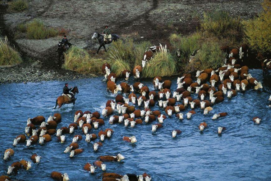 Chimehuin River, Argentina