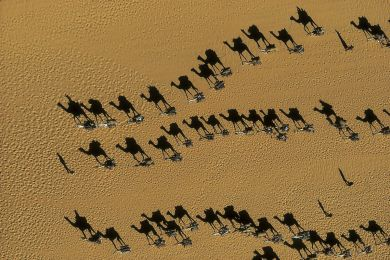 Dromedary caravans, Niger