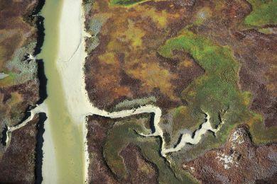 Paysage marécageux, Afrique du Sud