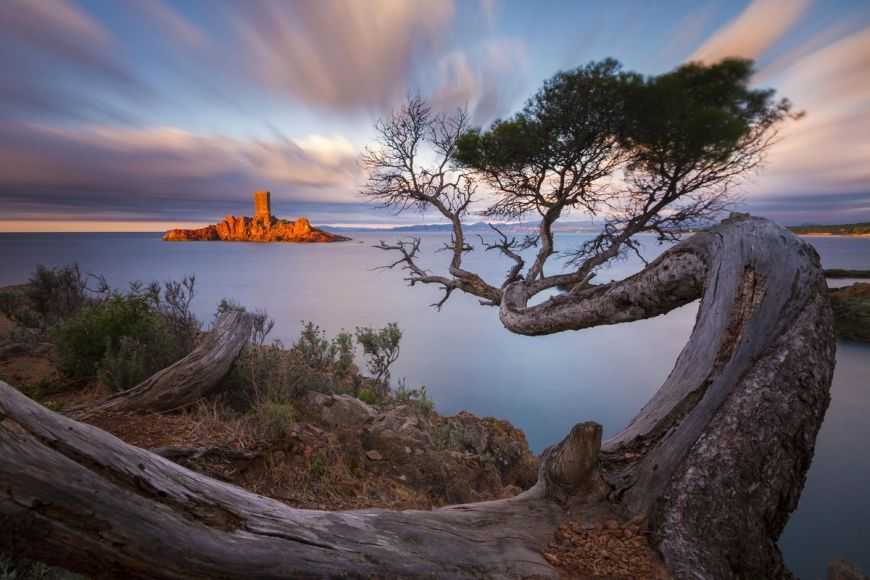 Tortuous pine tree, Saint Raphael, Var, France