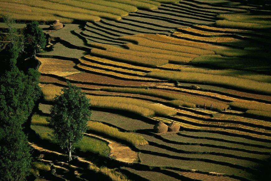 Rizière de Pokhara, Népal