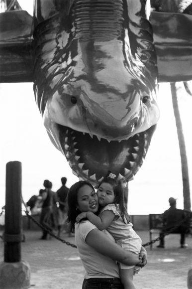 Manila, shark