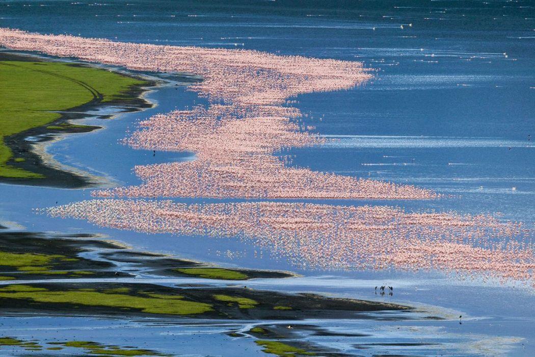 Kenya, vue aérienne de flamants, lac Nakuru