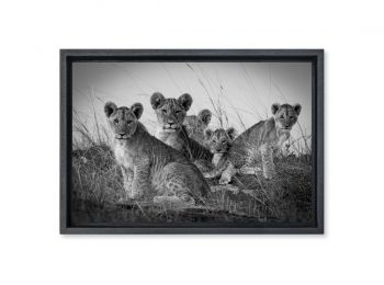 Kenya, cubs in the Masai-Mara (N&B)