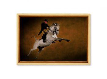 Lipizzan stallion, Siglavy Thais