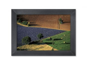 Vaucluse,Landscape of brightly colored fields