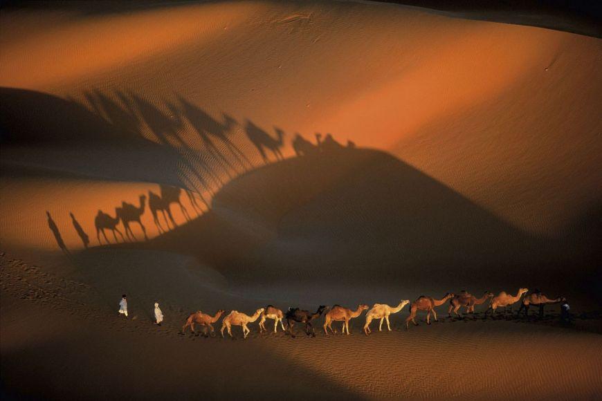 Dromadaires à Nouakchott, Mauritanie