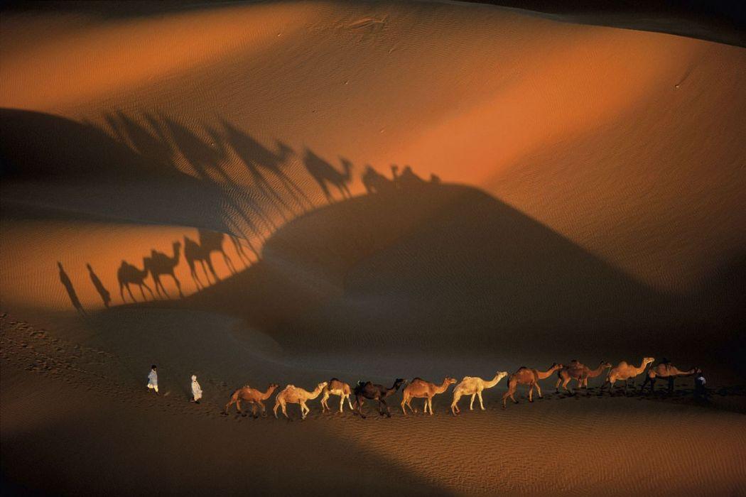 Dromedary near Nouakchott, Mauritania