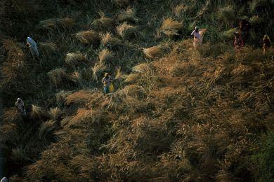 Travaux des champs au Rajasthan