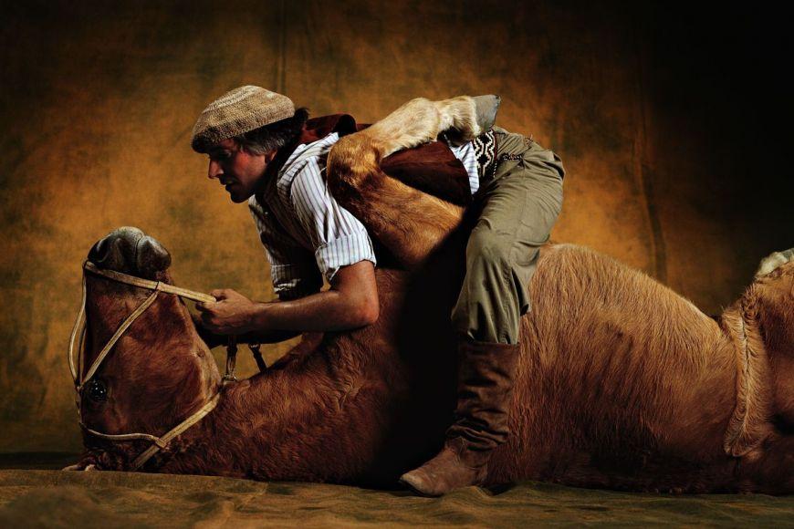 Criollo argentina horse