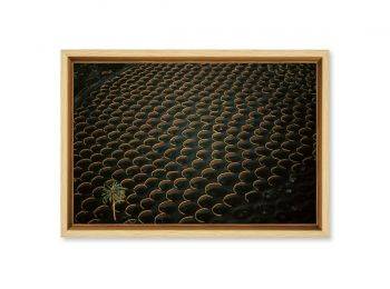Vignes à Lanzarote, Espagne