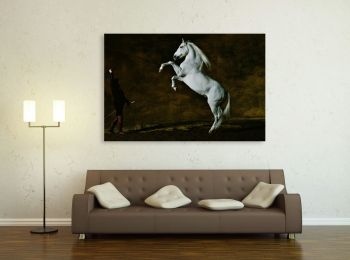 Cheval Pure Race Espagnole, Photo d'Art