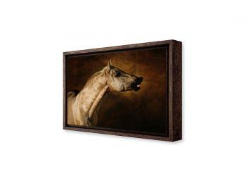 Palomino horse