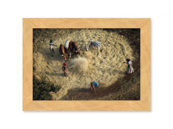 Récolte des céréales, Ethiopie
